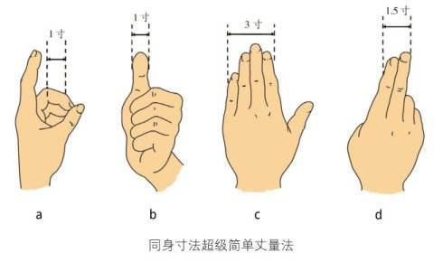 手指同身寸法(取穴比量方法示范图)
